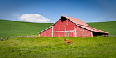 What a lovely sight to stumble upon - bright blue sky, beautiful red barn, a horse posing, and a puffy white cloud to complete the scene.