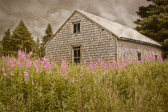 An old weatherd outbuilding near Lubec, Maine.  I love the contrast between the ominous clouds and the pretty flowers in the foreground.