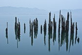 Tillamook Bay on the Oregon coast has many of these wonderful types of things in the water, piling, dead trees, etc.  At dusk, when the water is still and the fog creeps in, the place is phenomenal to photograph.