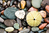 Sea-Urchin-and-Beach-Rocks_v1.jpg