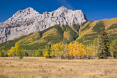 A small group of aspens overshadowed by the enormous peaks behind them.