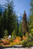 Taken along Cascade Canyon Trail in Grand Teton National Park, you have to take the ferry across Jenny Lake to get to this trail, and the beginning is pretty steep, but then it opens up into a flat trail in a vally between 11,000 foot snow-covered mountains on each side.
