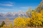 Autum Colors in the Grand Teton National Park.