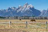 This has to be one of the most incredible horse pastures in the world.  Just along the main road in Grand Teton National Park.