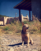 This roadside dog seemed to be the main sentry guarding Las Trampas and the San José de Gracia Church. The scene felt like it was right out of the 1970s, so i edited it to match the mood.