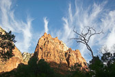 A dramatic sunrise scene in Zion National Park. I liked how the tree echoed the cloud formations.